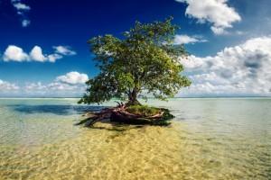 tree wallpaper beach