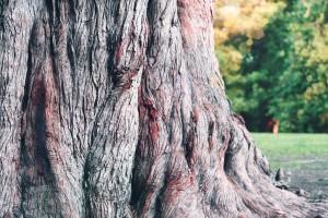 tree wallpaper brown
