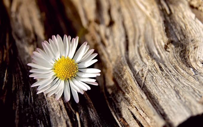 tree wallpaper flowers