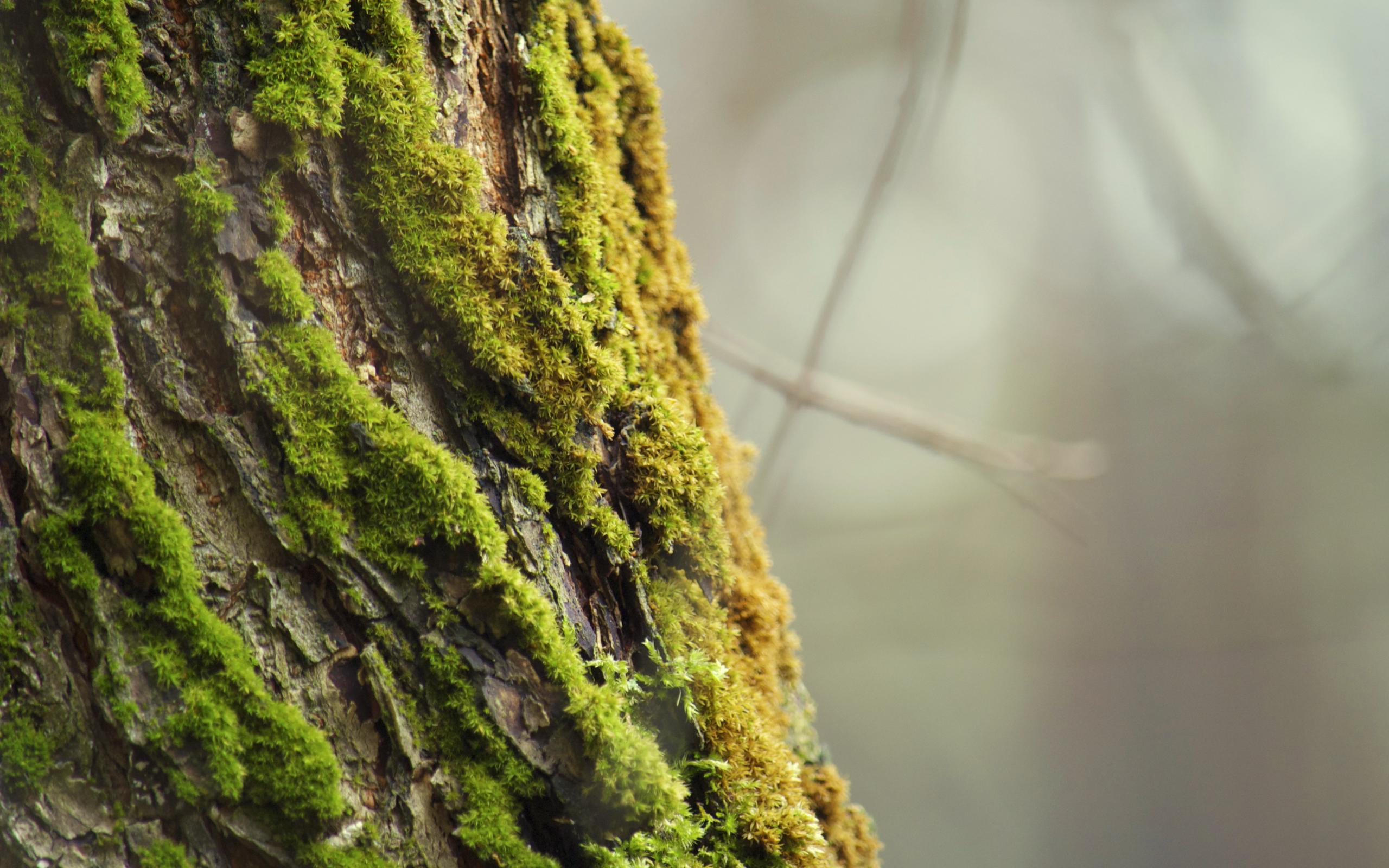 tree wallpaper green