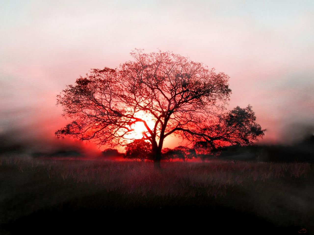 tree wallpaper sunrise