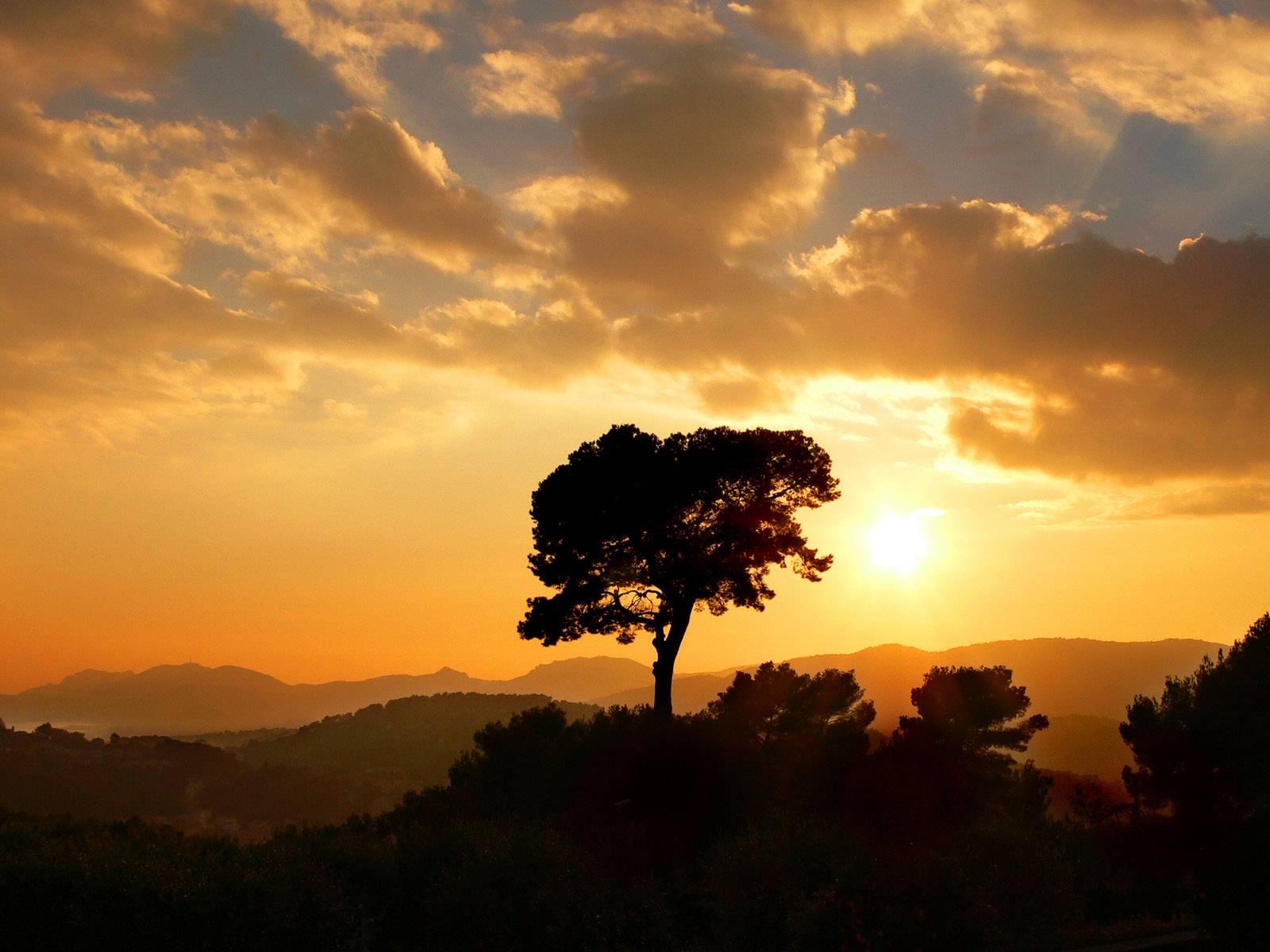 tree wallpaper sunset