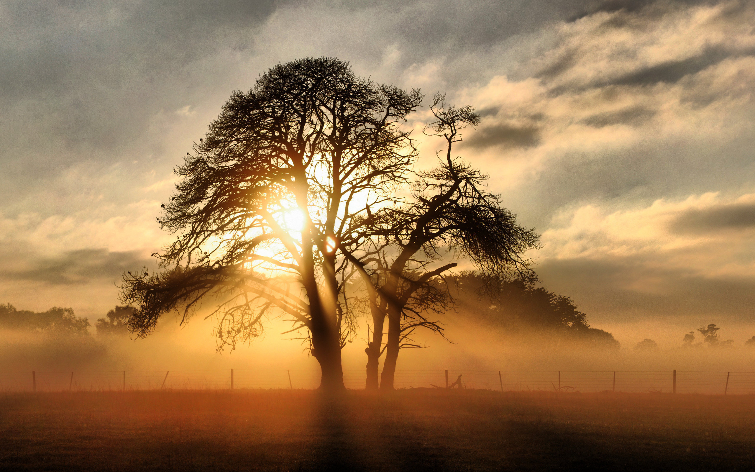 tree hd wallpapers - photo #26