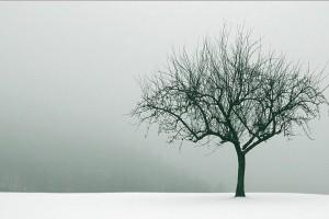 tree wallpaper winter