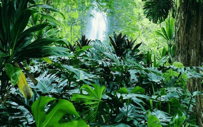 tropical forest A2 amazing