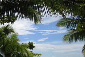 tropical nature background