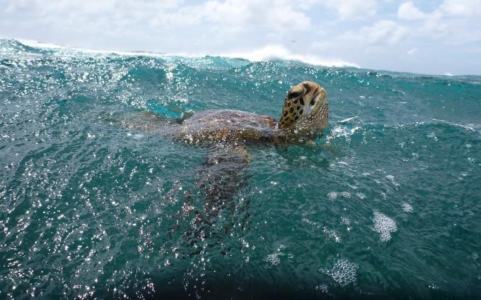 turtle ocean