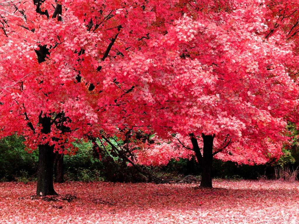wallpaper autumn hd pink
