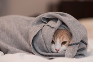 wallpaper baby cat