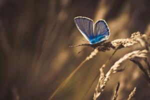 wallpaper butterfly hd