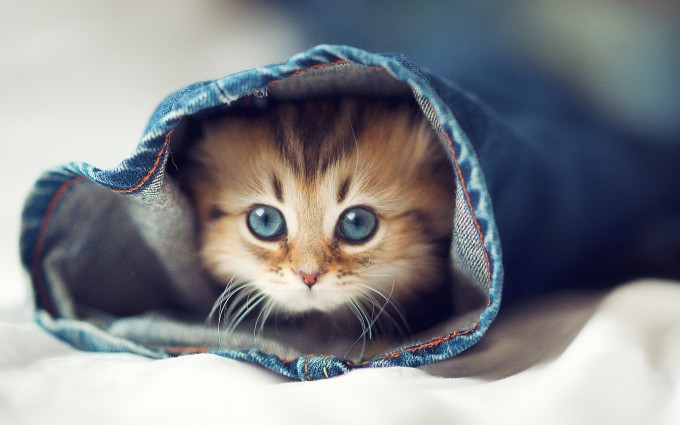 wallpaper cat cute
