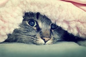 wallpaper cats hd