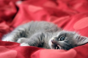 wallpaper cats kittens