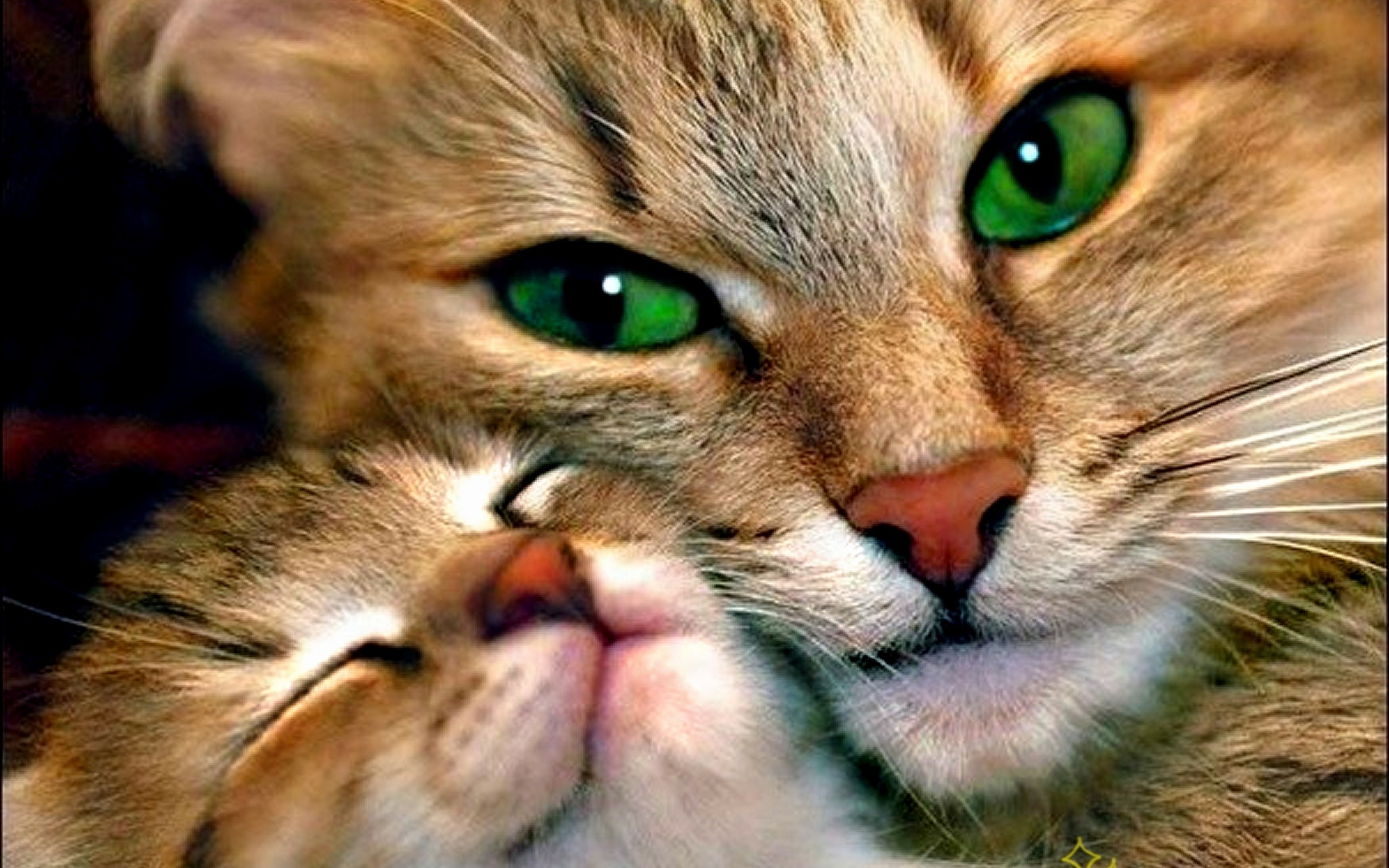 wallpaper cute cats kittens