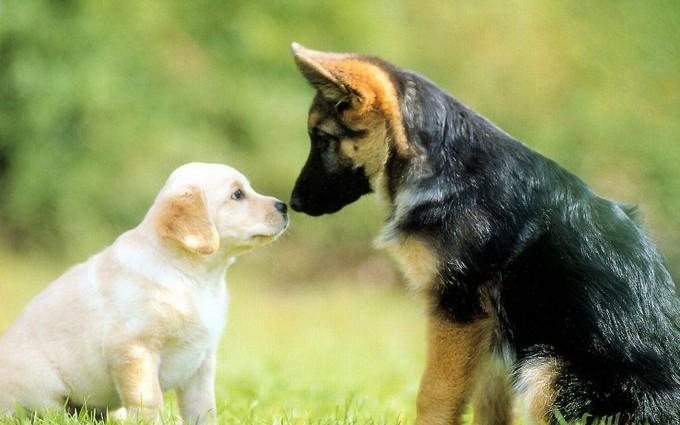 wallpaper cute dogs