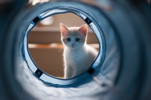 wallpaper cute kittens