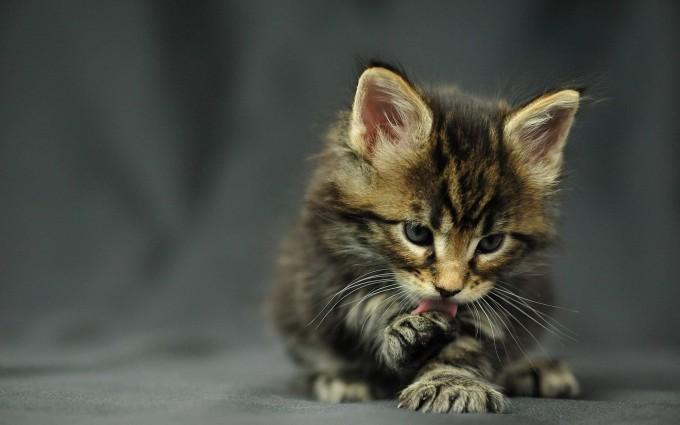 wallpaper cute kitty