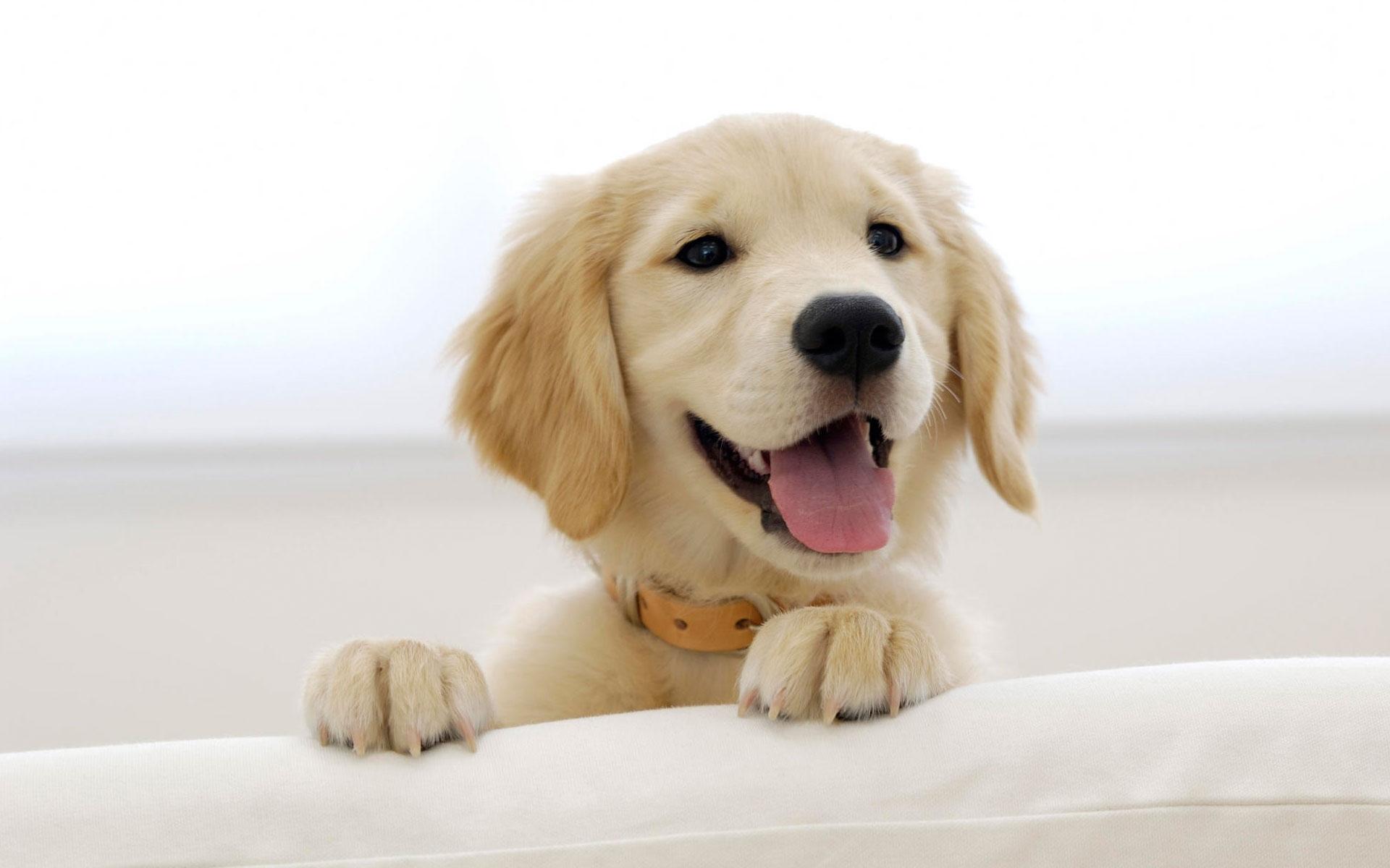 wallpaper cute puppy