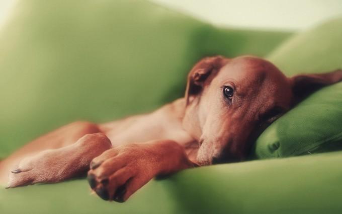 wallpaper dog download