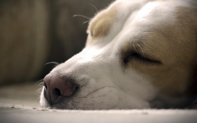 wallpaper dog hd