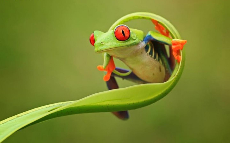 wallpaper frog
