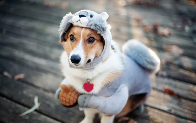 wallpaper funny dog