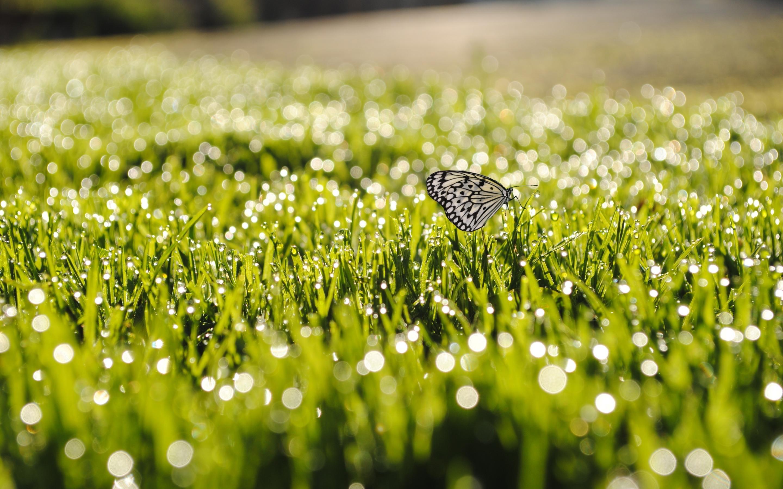 wallpaper hd butterfly