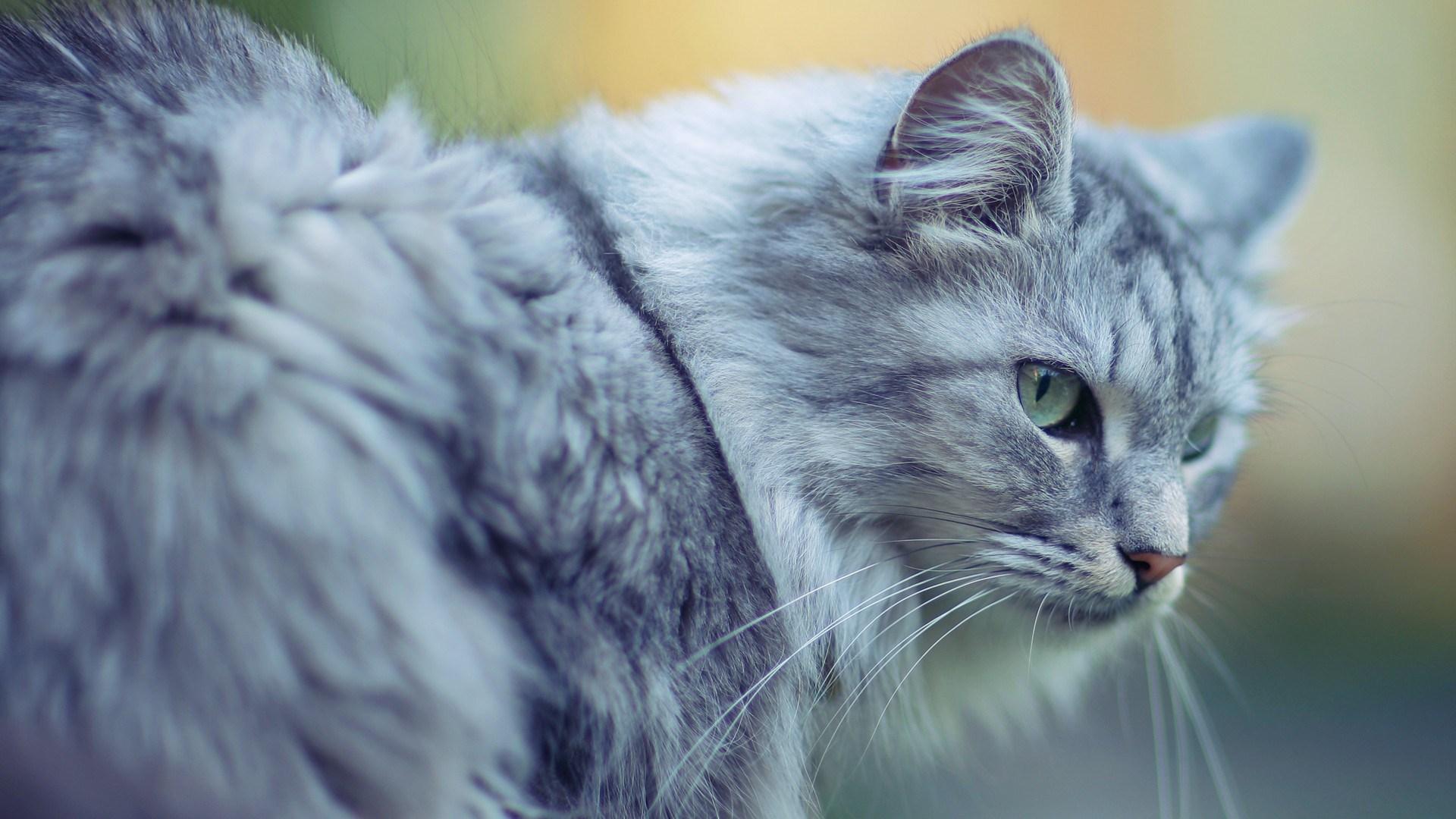 wallpaper hd cats