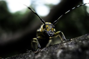 wallpaper insects