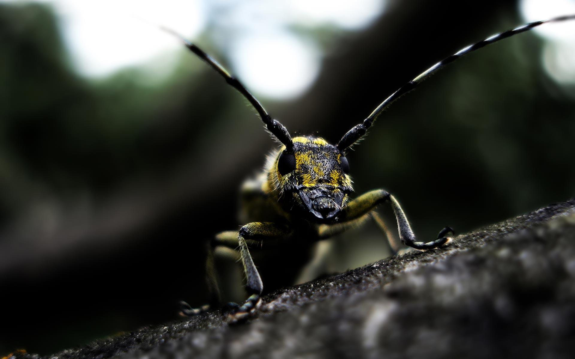 wallpaper insects - HD Desktop Wallpapers | 4k HD