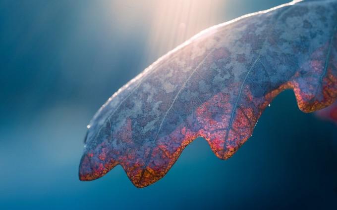 wallpaper leaf