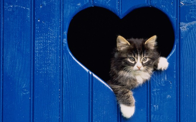 wallpaper of cats and kittens