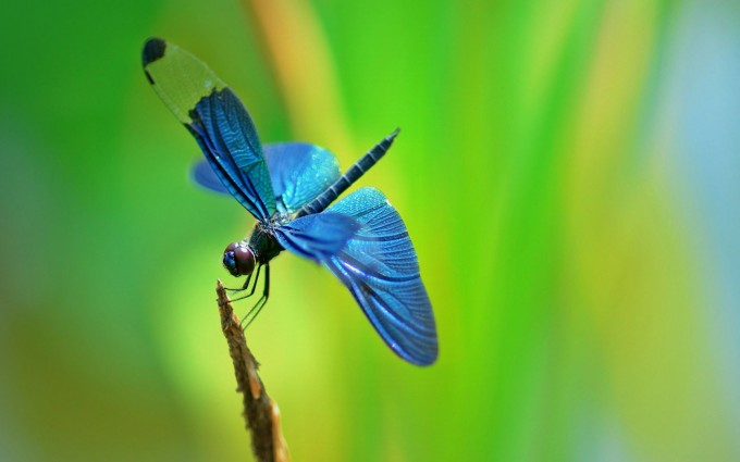 wallpaper of insects