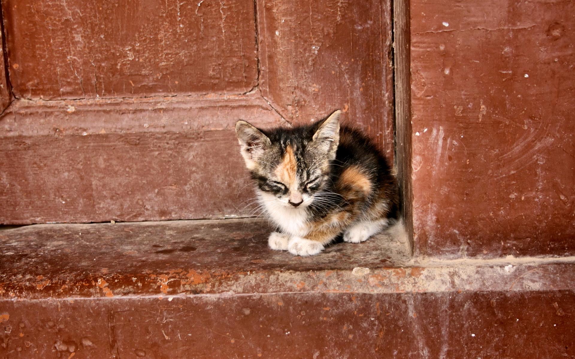 wallpaper of kitty