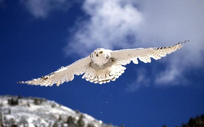 wallpaper owl