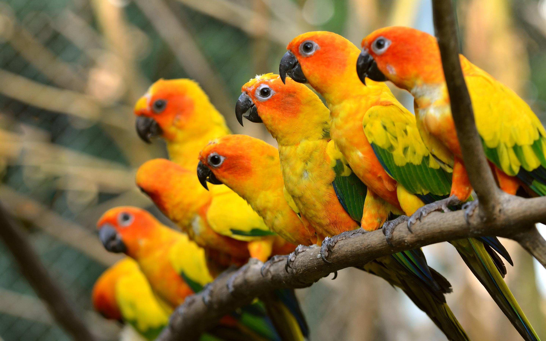wallpaper parrot