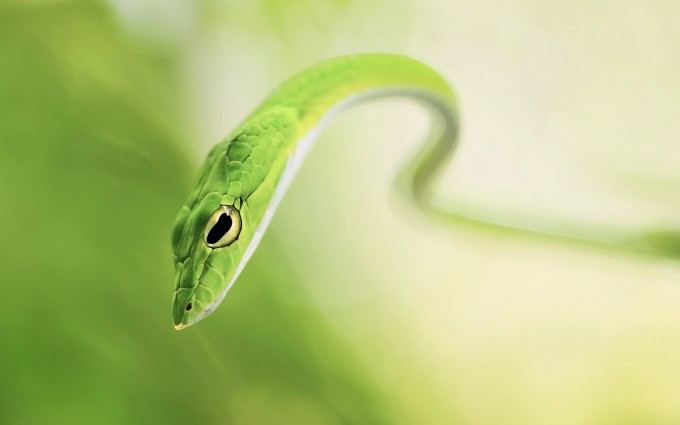 wallpaper snake hd