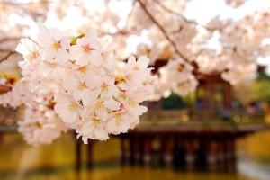 wallpaper spring season
