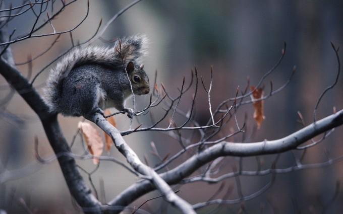 wallpaper squirrel