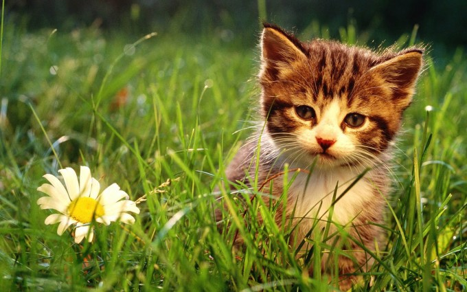 wallpapers cats kittens