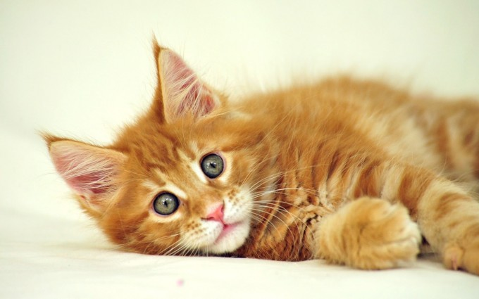 wallpapers cute cats