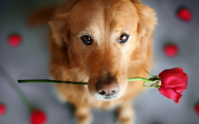wallpapers cute dogs