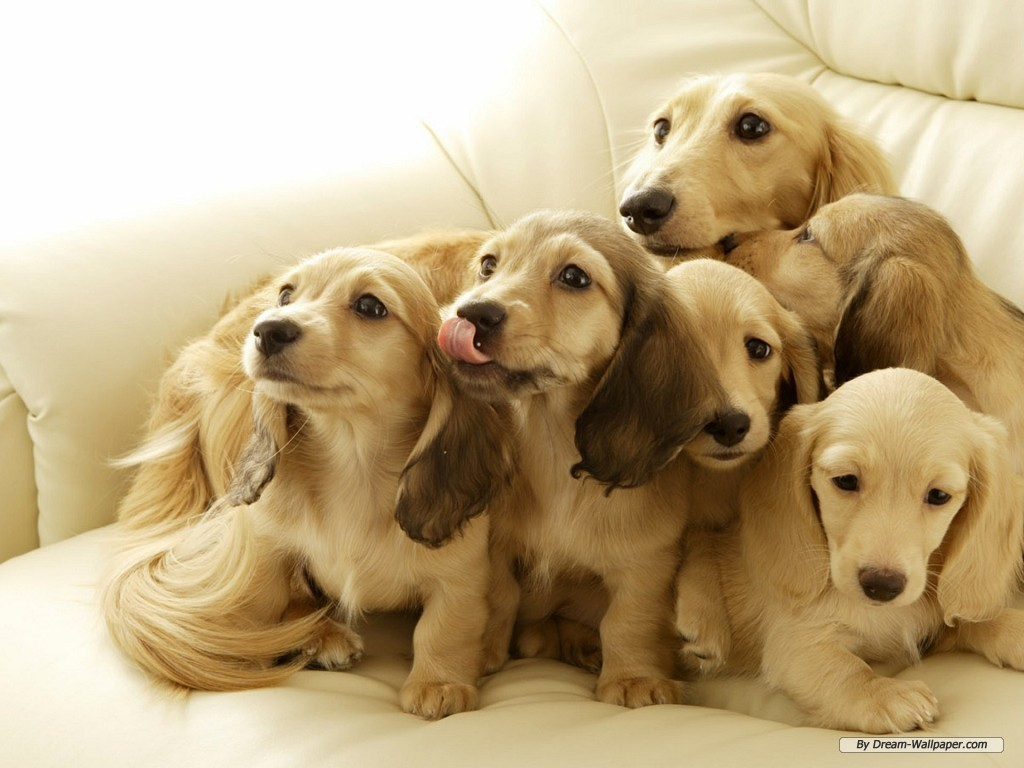 wallpapers cute puppies