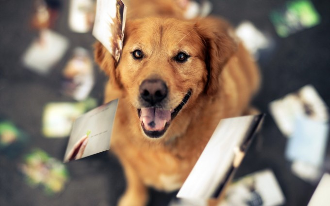 wallpapers dog