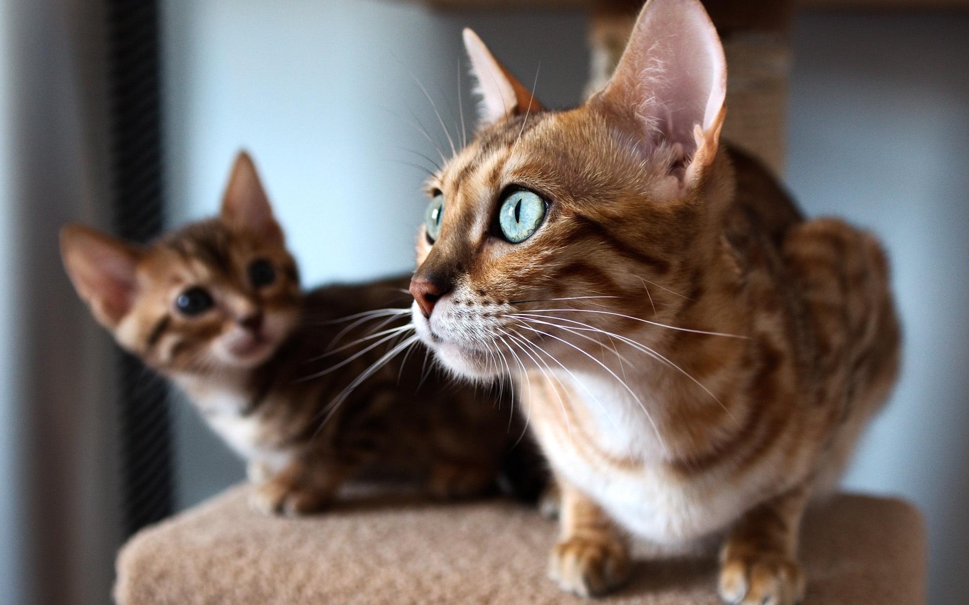 wallpapers kittens