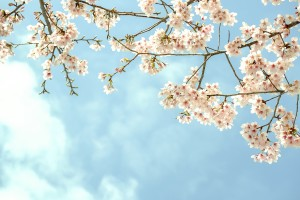 wallpapers nature spring