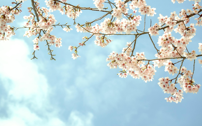 wallpapers nature spring - HD Desktop Wallpapers   4k HD