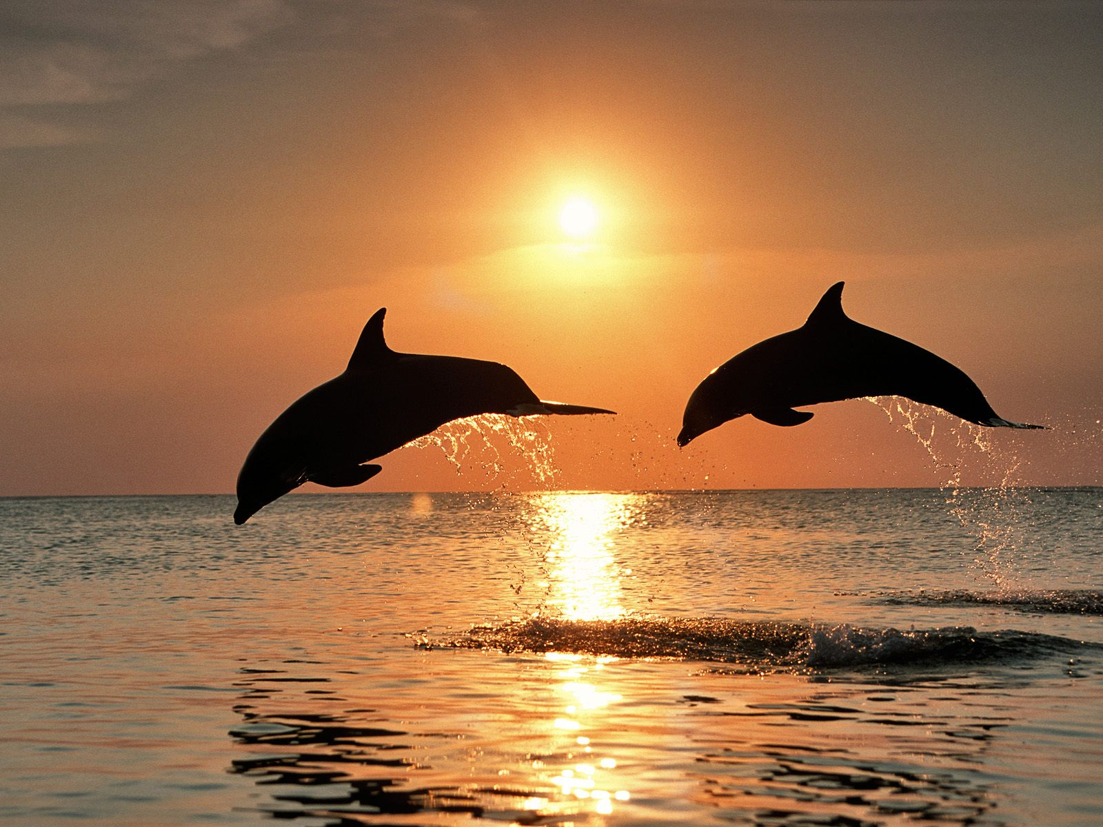 wallpapers of dolphins