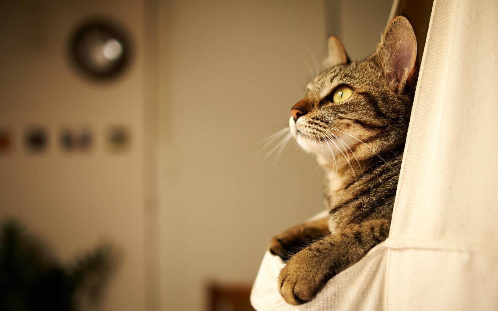 walpaper kitty