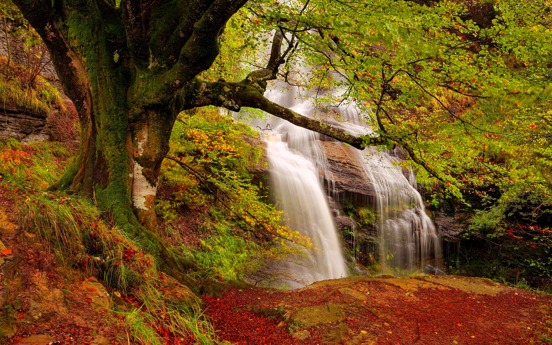 Forest Waterfall Wide Desktop Background